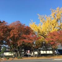 IMG_2096紅葉本山